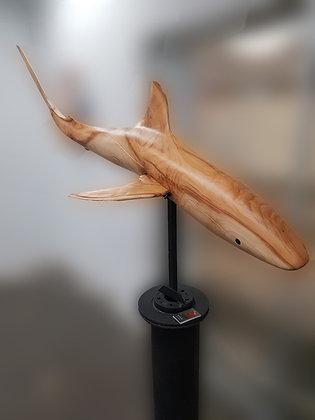 Reef Shark by Michael Edmund Ray
