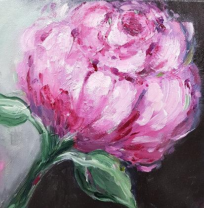 Solo by Lauren Morris