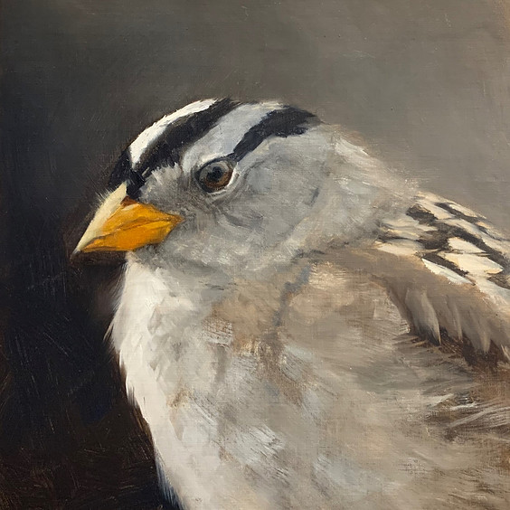 Let's Paint a White-Crowned Sparrow Art Class