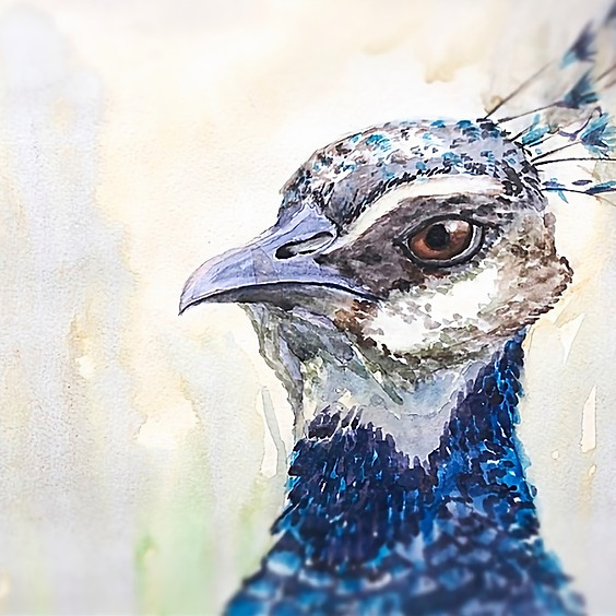 Paint a Peacock in Watercolour Art Class