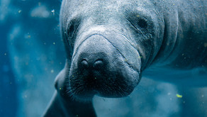 Manatees and Monkeys, Oh My! By: River Staggs (Age: 13)