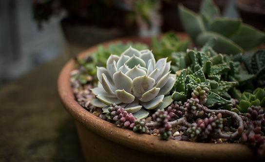cacti-1846147_1280.jpg
