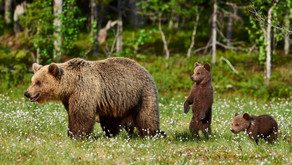 Ten Rules Baby Cubs Have to Follow by Avian Rojas (Age: 12)