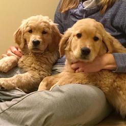 Lap puppies 😍 ----------------------- #