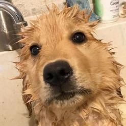 Bathtime 😆 #suchagoodboy #allcleanformy
