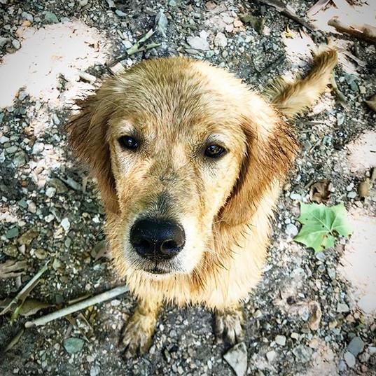 Happy river dog! #thisismerlin #ivywestg