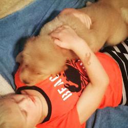 Puppy snuggles make everything better 🌟👍 #ivywestgoldens