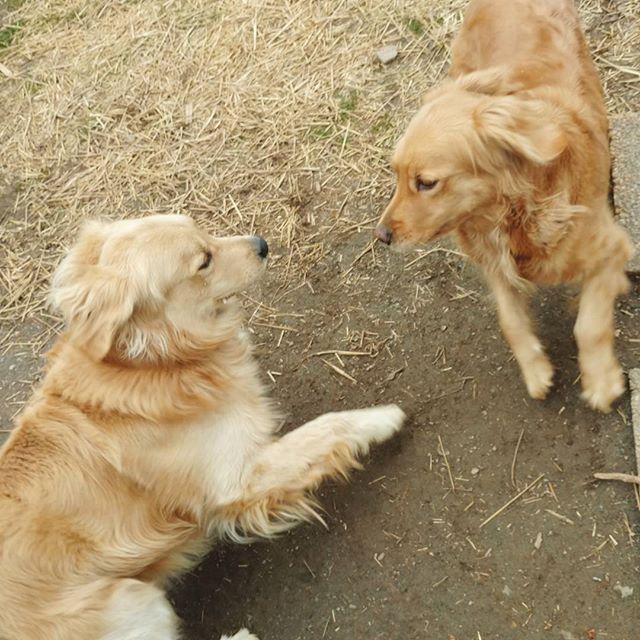 Doggie flirting ;) Trigger and Sunny