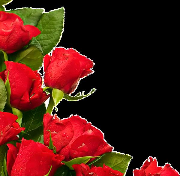 rose3_edited_edited.png