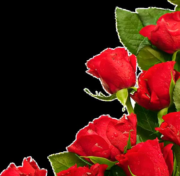 rose3_edited_edited_edited.png