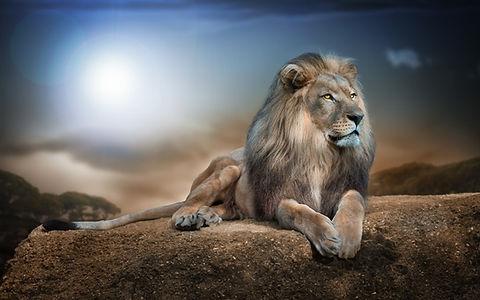 Lion for TOTB.jpg