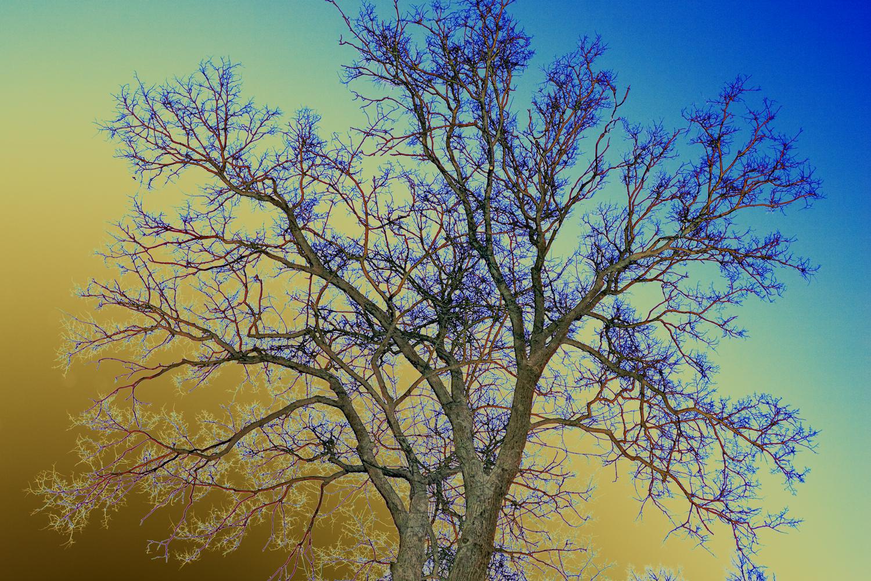 Дерево на сине-золотом небе
