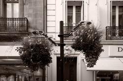 cannes, street's flowers