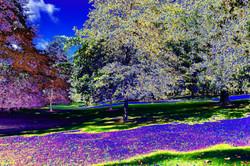 Lilac river