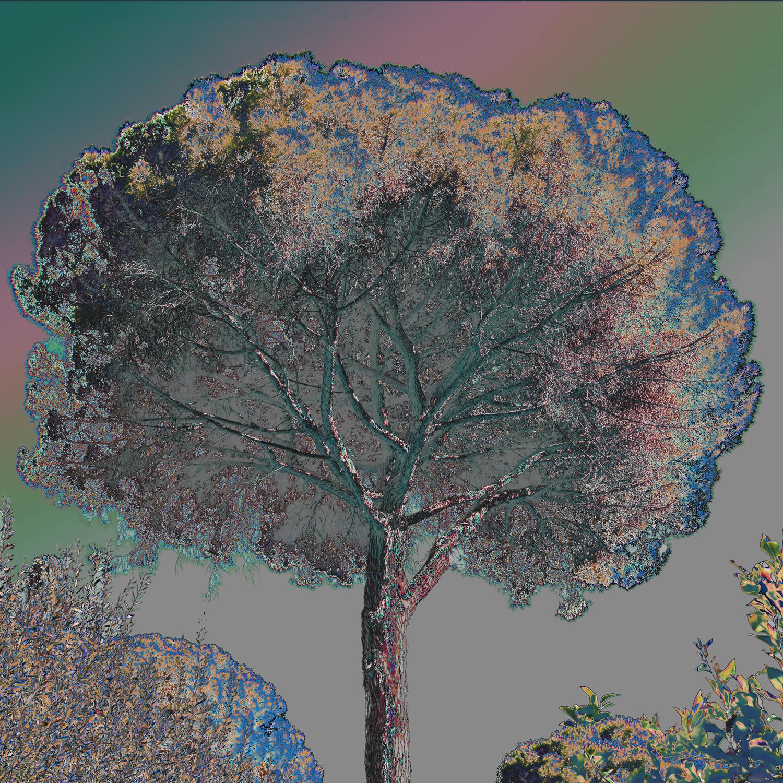 Дерево 32