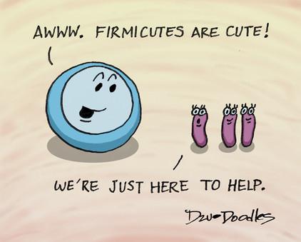 Firmicutes