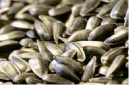 canola seed.png