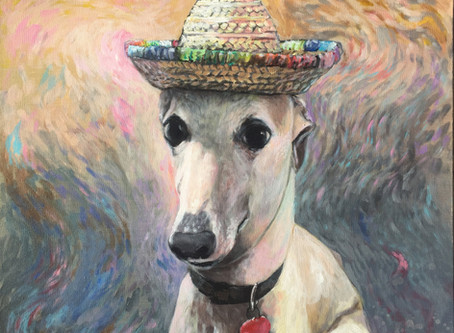 Marco the Whippet
