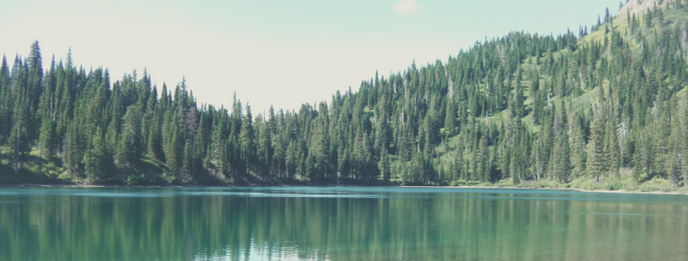 pine trees + water.png