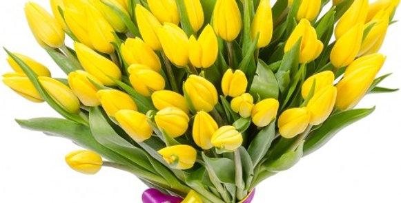 51 тюльпан (желтые)
