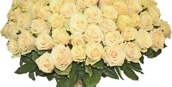101 кремовая роза(60см)