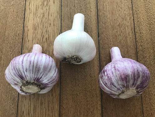 Mixed bag of Garlic