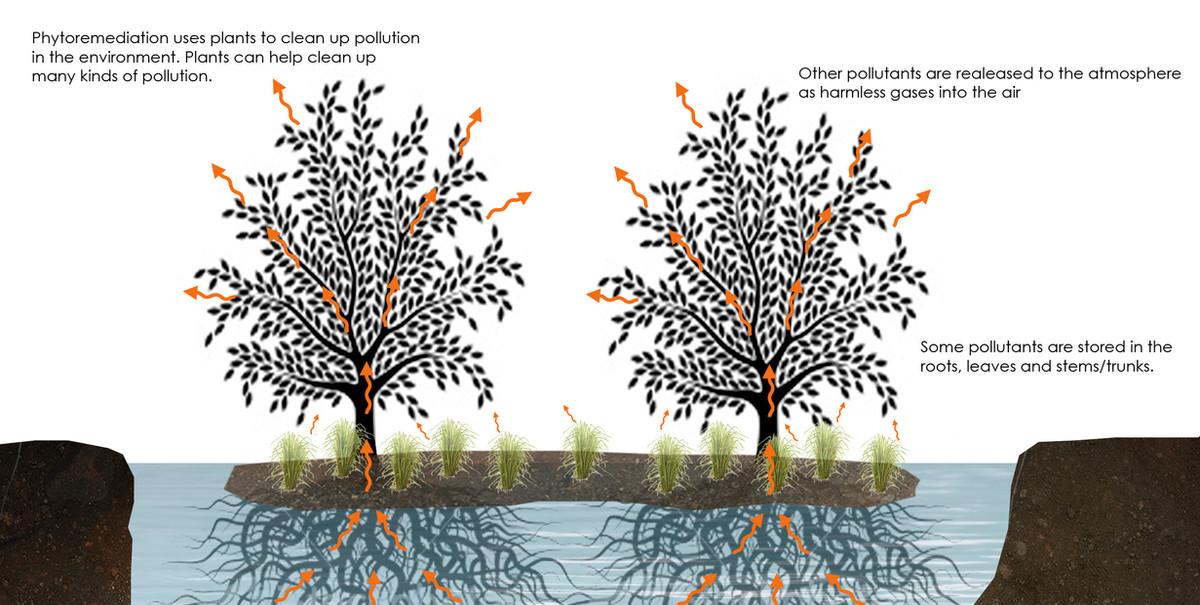 Phytoremediation.jpg