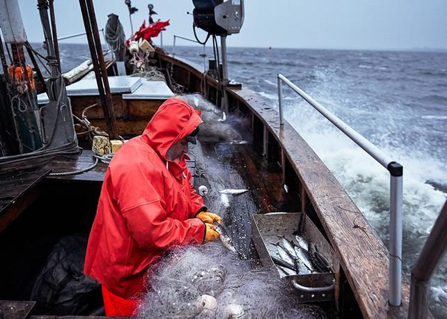 Heringsfischerei auf der Ostsee
