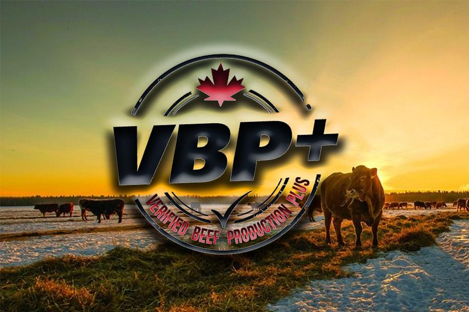 VBP+ Website Header.png