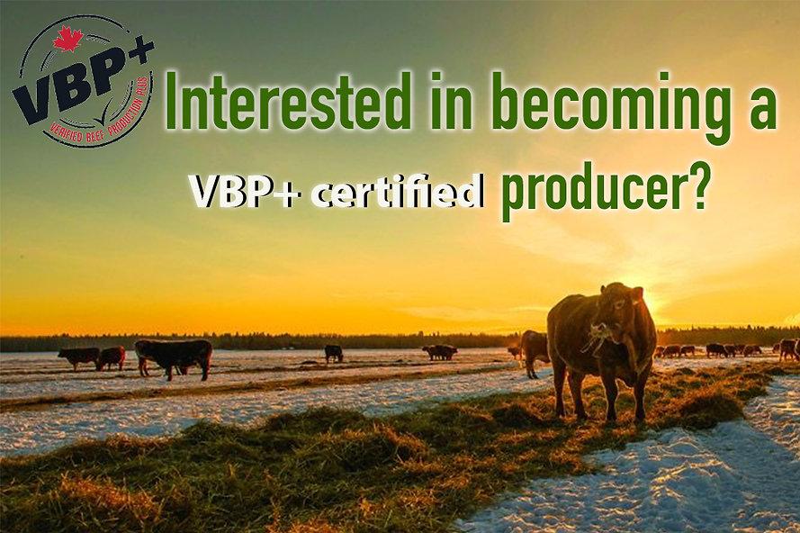 VBP+ Website Header.jpg