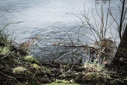 Lake-Lanier-6.jpg