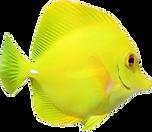 pez.png