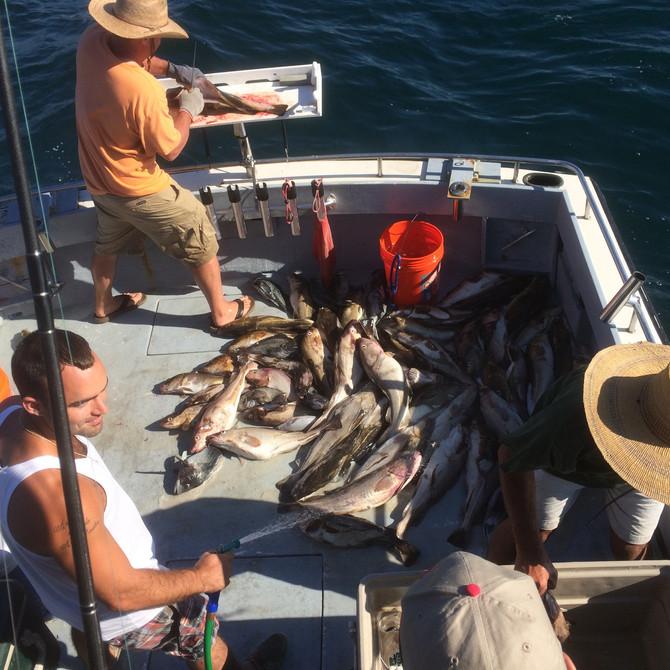 """Grand-slam"" Cod Fishing Continues..."