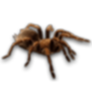 1-spider-png-image-thumb.png