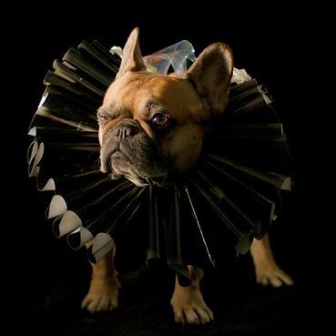 puppymaster_kim mejdahl 1.png