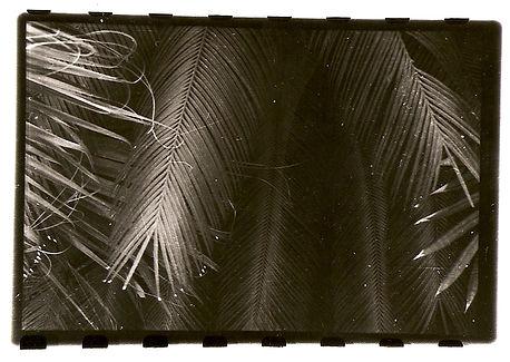 kim richard adler mejdahl_palm leafs.jpg