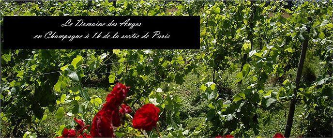 Bandeau_Domaine-des-Anges-Champagne.jpg