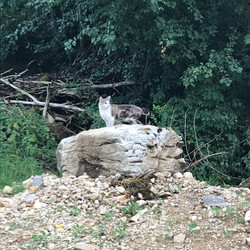 Notre chat Maui