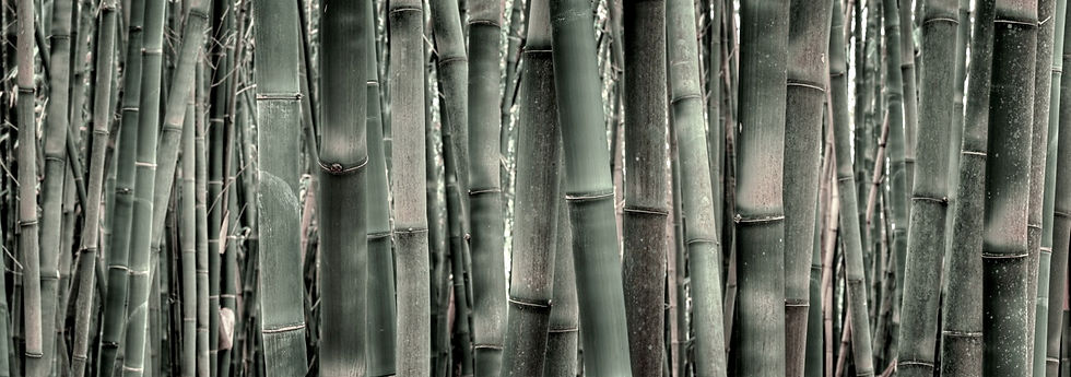 Bamboo Neutral.jpg