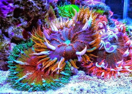 Rock_Flower_Anemones_1024x1024.jpg