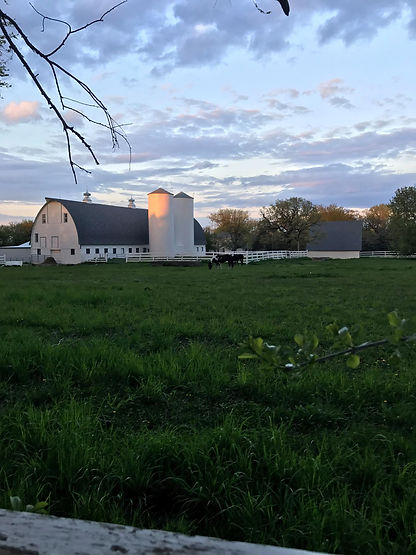 Pasture with horses, large white barn with silos at Peacebunny Cottage, the year round home of the rabbits that go to Peacebunny Island