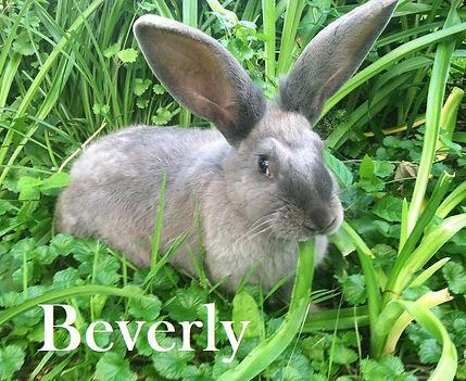 Beverly PB.jpg