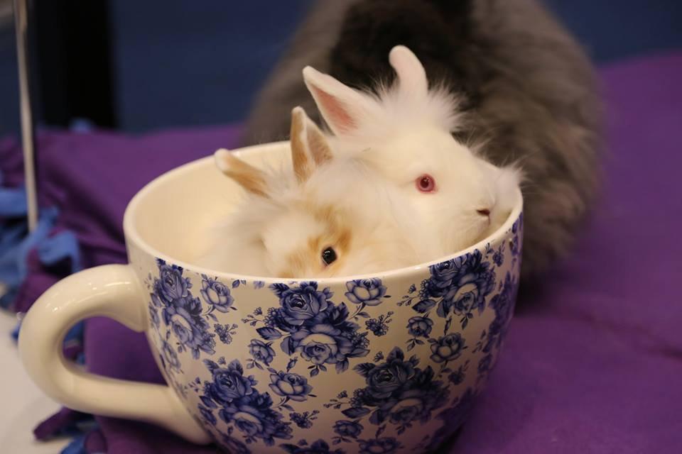 "Thankyou Teacup ""Bunny-Gram"""