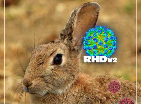 EDUCATION: Rabbit Hemorrhagic Disease (RHDV2) in Minnesota