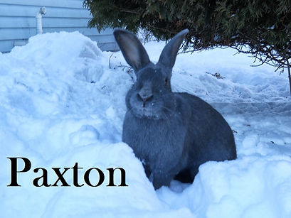Paxton PB.jpg