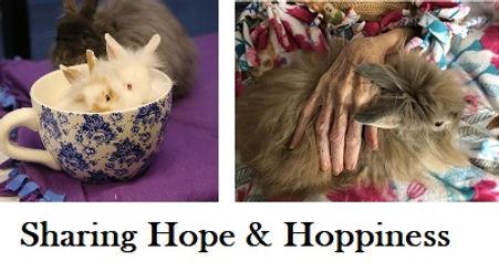 hospice hands 1.jpg