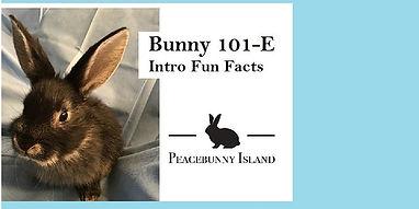 Bunny 101E.jpg