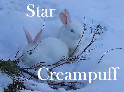 Star Creampuff PB.jpg