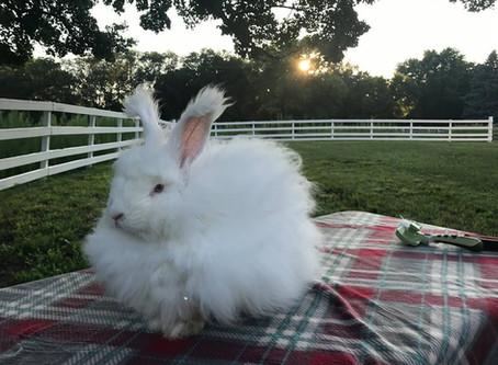 Hare Salon & Tuesday Toofers