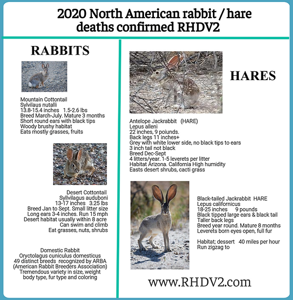 RHDV2 rabbits deaths compare.png